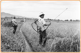 圖5 防瘧人員於稻田間噴灑DDT殺蟲劑