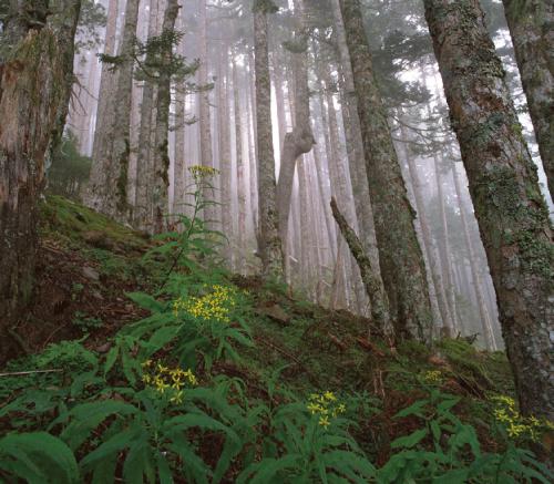 圖13 雪霸國家公園的原始森林