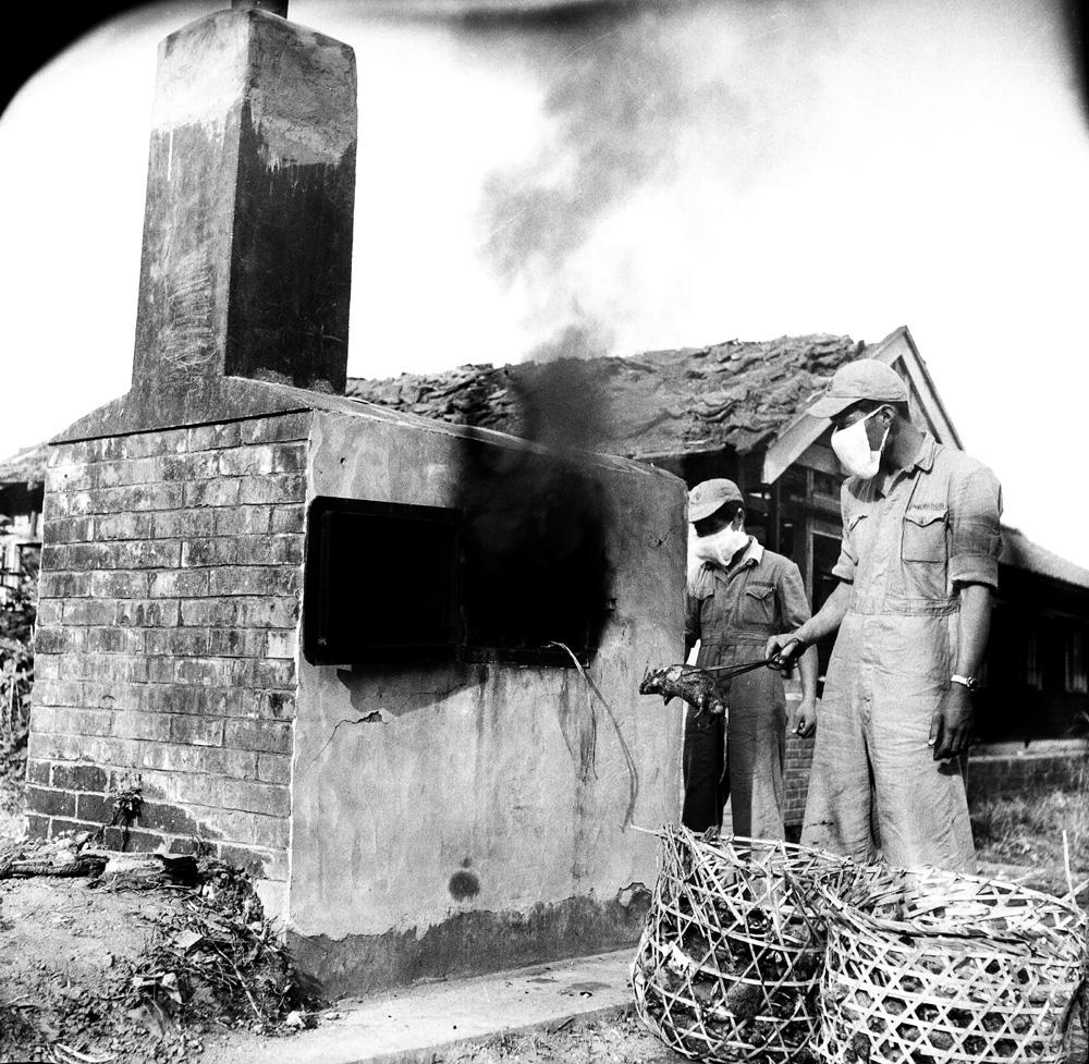 圖10 防疫人員進行死鼠焚化作業